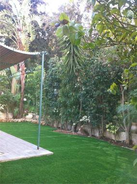 דשא דשא 11