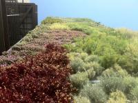 קירות ירוקים - ריצ'ארד רוזנבאום 11