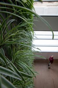 קירות ירוקים - ריצ'ארד רוזנבאום 12
