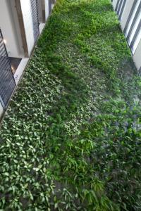 קירות ירוקים - ריצ'ארד רוזנבאום 15