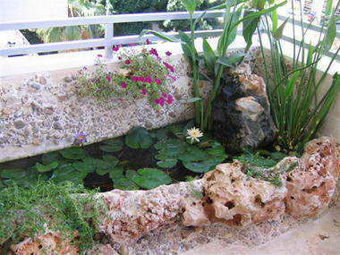 מים שקטים - בריכות נוי ומפלים 1