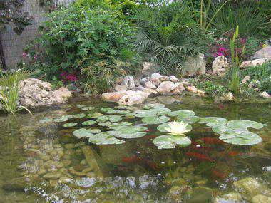 מים שקטים - בריכות נוי ומפלים 2