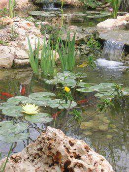 מים שקטים - בריכות נוי ומפלים 3