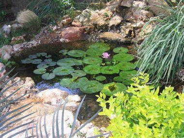 מים שקטים - בריכות נוי ומפלים 4