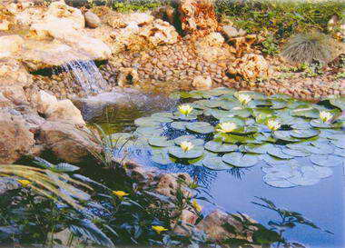 מים שקטים - בריכות נוי ומפלים 7