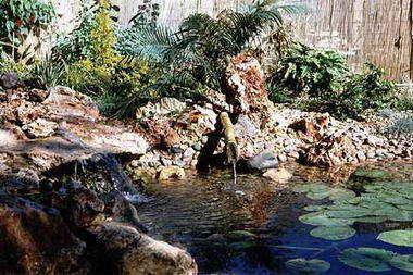 מים שקטים - בריכות נוי ומפלים 8