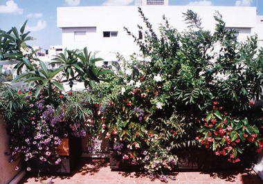 נוף - חי גינון ואדניות עץ 12