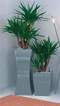 נענע-דקו - צמחיית פנים 7