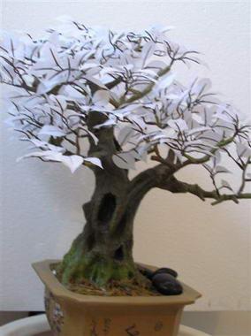 דקו-אין Deco-In עיצוב בצמחייה 7