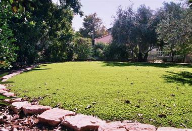 דשא עוז דשא סינטטי 2