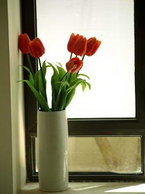 ורד מנור-גילהר יעוץ פנג שואי 8